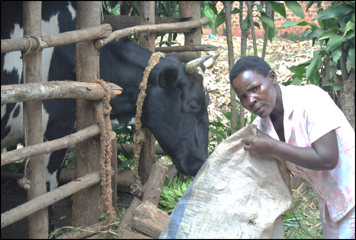 Thumbnail for the post titled: Uganda – Cows for Orphans Update